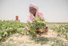 FN organisationer slår alarm i det centrale Sahel, hvor millioner sulter under den hurtigt eskalerende humanitære krise
